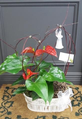 Plante 8