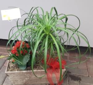Plante 9