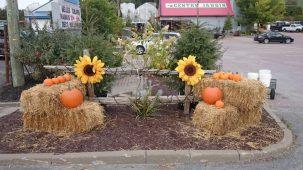 Décoration automnale, Ballot de paille, roue de charrette,chrysanthème d'automne