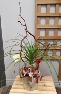 Plante 4