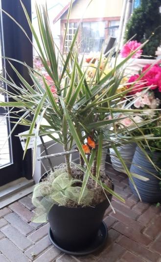 Plante 6