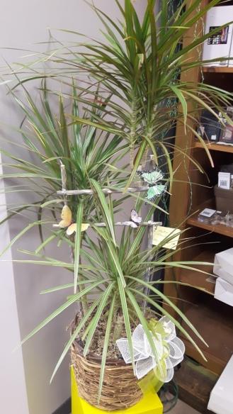 Plante 7