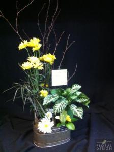 Plante 14