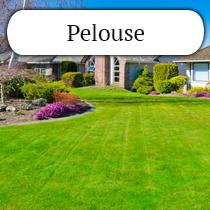 pelouse2