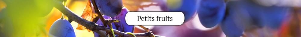 petits-fruits3