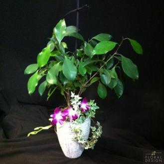 Plante 16