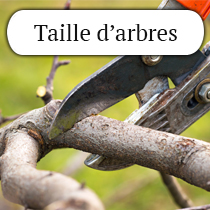 taille-arbre