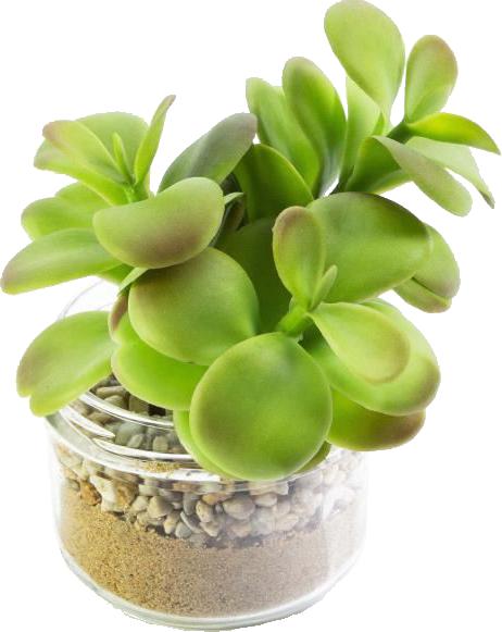 plante-succulente-en-pot