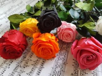 Rose-eternelle-de-couleurs