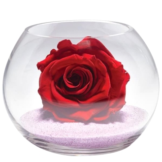 Rose-eternelle-en-cloche