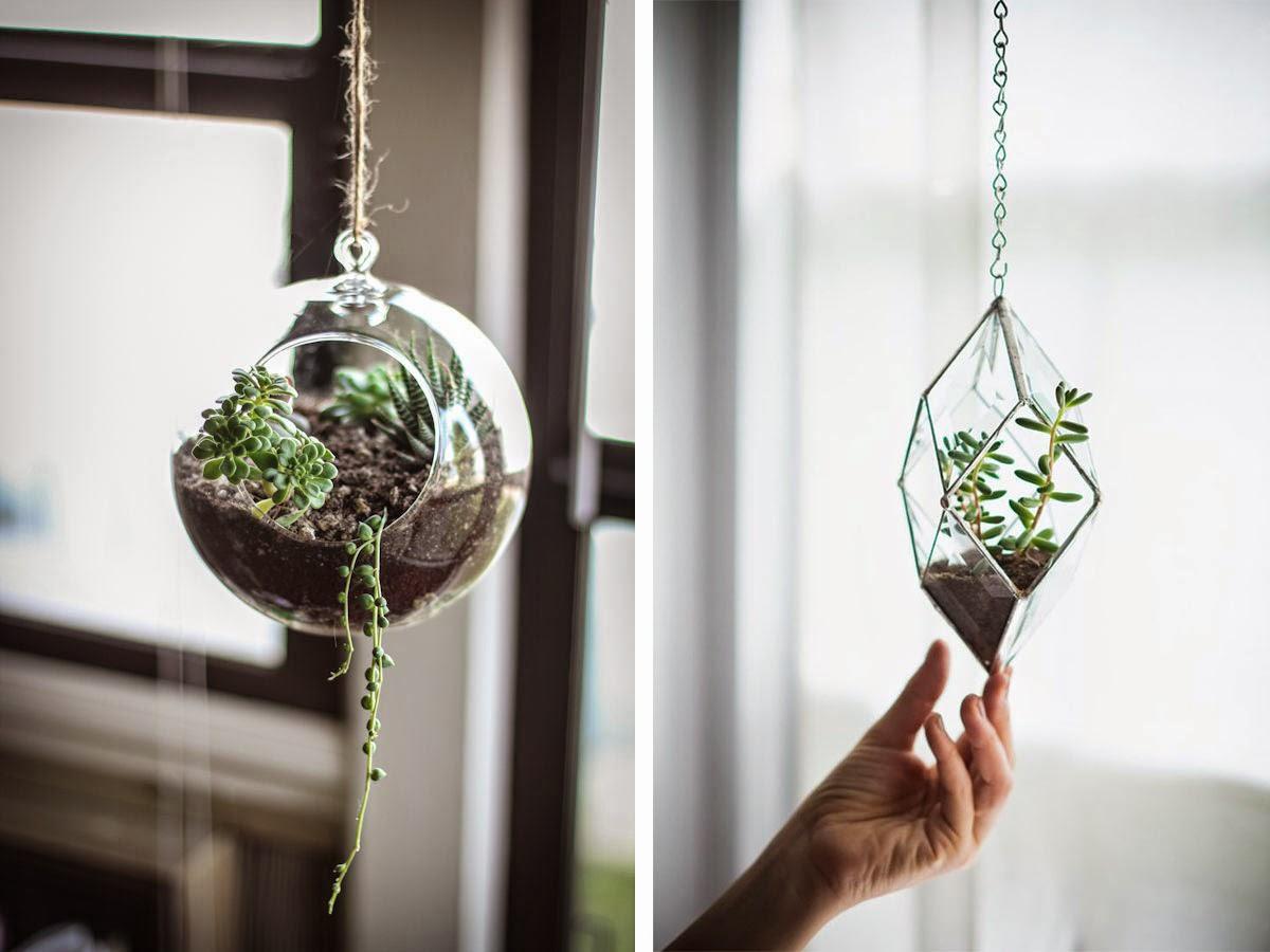 boule-verre-plante-grasse-suspendue-plafond-bocal-terrarium