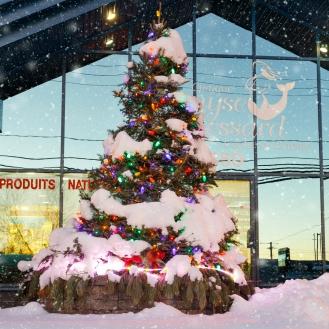 Sapin de Noel naturel: Prix variés